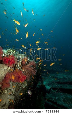 Cargo Of The Yolanda Wreck And Coral Reef In The Red Sea.