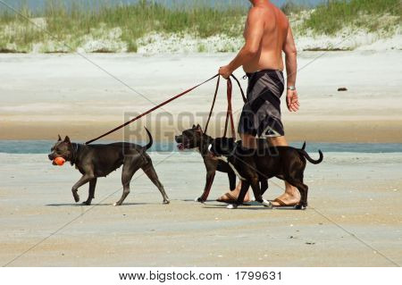 Walking The Dogs On The Beach