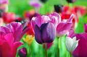 foto of may-flower  - beautiful spring flowers - JPG