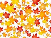 foto of fall leaves  - Seamless tile background of falling Autumn leaves - JPG