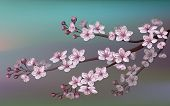 Realistic Sakura Japan Cherry Branch With Blooming Flowers. Nature Background With Blossom Branch Of poster