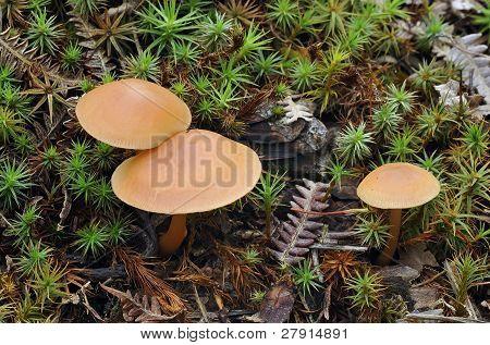 Deceiver Fungi