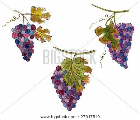 Set of bunches of grapes