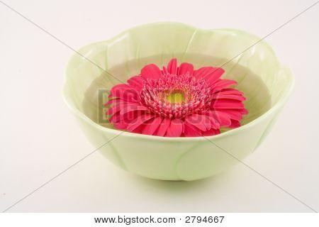 Gerbera Daisy In Green Bowl