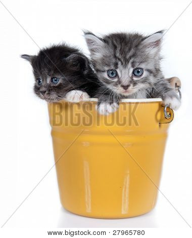 Small kittens on a white background. Age - 1 month