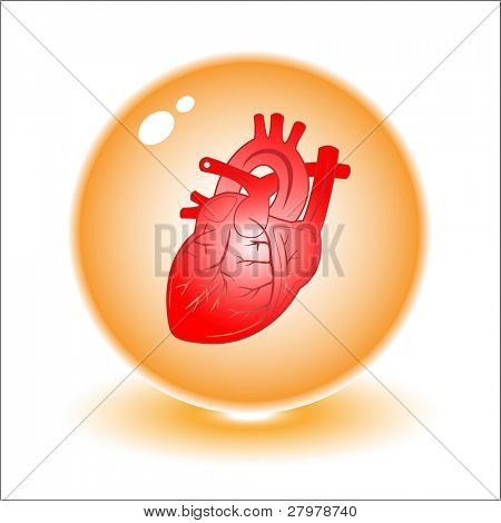 Vector heart illustration. Simply change. Other medical vectors you can see in my portfolio.