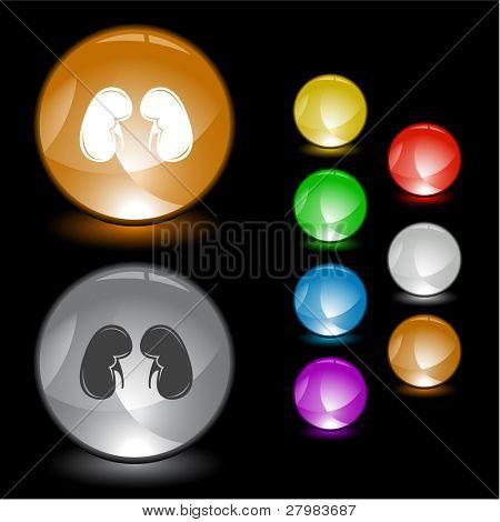 Kidneys. Vector interface element.