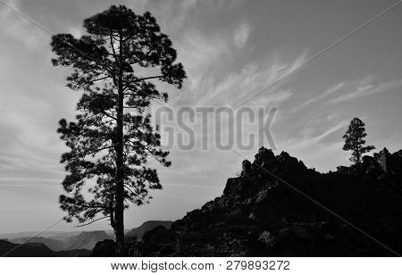 Mountain Landscape With Large Pine