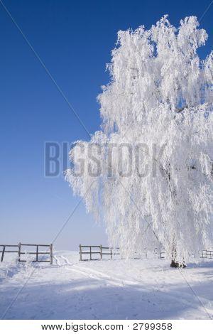 Frosty Tree By The Snowy Path