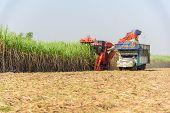 Harvest The Fresh Sugarcane By Sugarcane Harvester poster