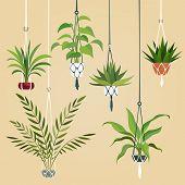 Hanging House Plant. Indoor Plants With Macrame Hanger. Scandinavian Interior Planting Vector Illust poster