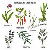 Best Herbal Remedies To Cure Phlegm. Hand Drawn Set Of Medicinal Herbs poster