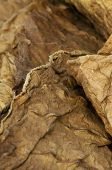 stock photo of tobaco leaf  - Dried tobacco leaves fine details closeup studio shot - JPG