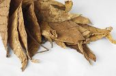 pic of tobaco leaf  - Dried tobacco leaves fine details closeup  - JPG