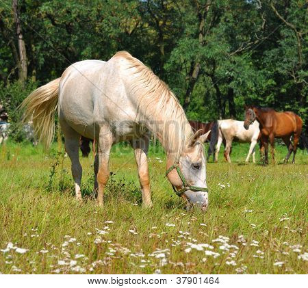 White Horse Pastures In Field