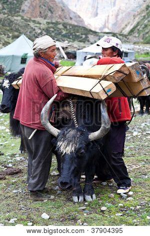 tibetische Drover mit yaks