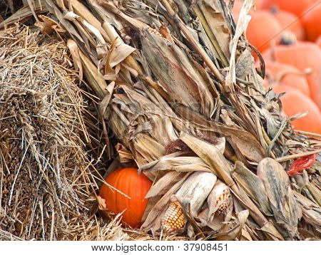 Cornstalks and Pumpkins