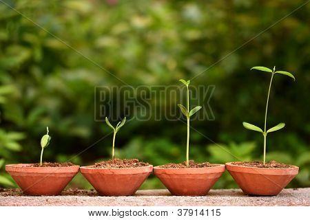 Plantas de crescimento-bebê de planta