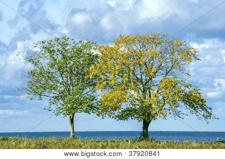 Two Trees On Seaside