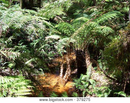 Australiano Creek con helechos arborescentes