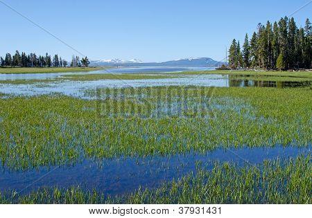 Pelican Creek, Yellowstone National Park, Wyoming, Usa