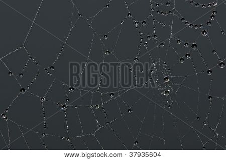 dark spiderweb