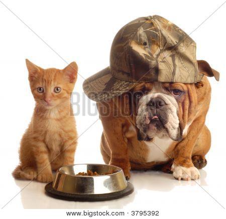 Bulldog y gato en el plato de comida junto