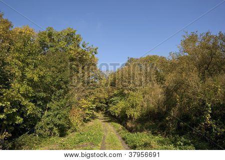 Autumn Bridleway