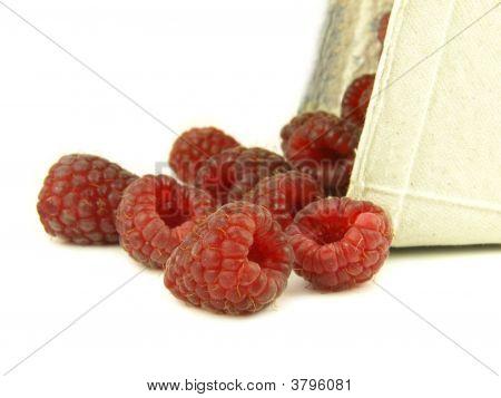 Raspberry In Zoom