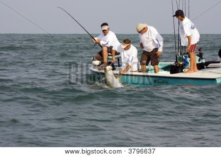 The Tarpon Tires And The Mate Sets The Gaff Hook