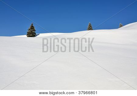 Three Fir Trees On Snowy Hills
