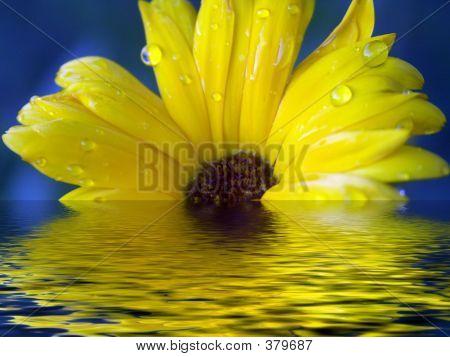 Yellow Flower Sinking In Water