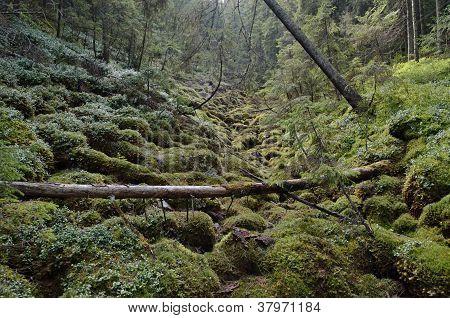 European Rain Forest