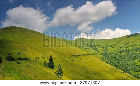 Mountain Pastures In Ukraine