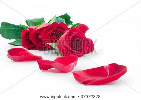 Roses And The Scattered Petals
