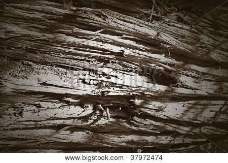 Textured Trunk Background