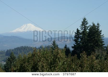 Mount Adams And Orchard