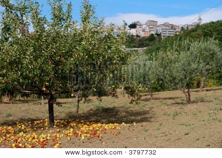 Rural Landscape With Apple Tree And Little Village