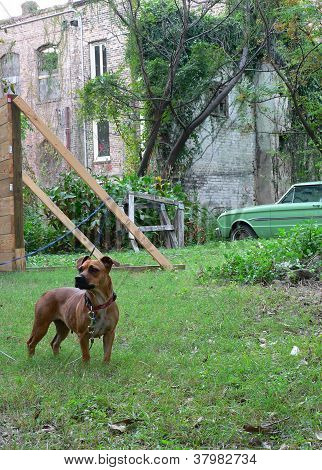 Dog And Rundown Building