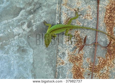 Lizard On Tin