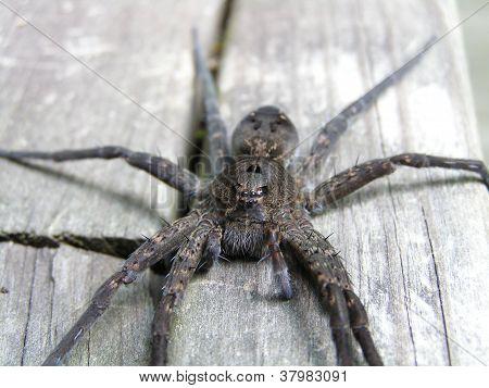 Spider (horizontal)