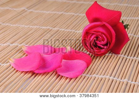 rose and petals on bamboo