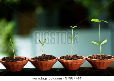 Plant Growth - Baby Plants