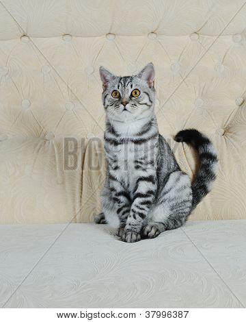 striped pet