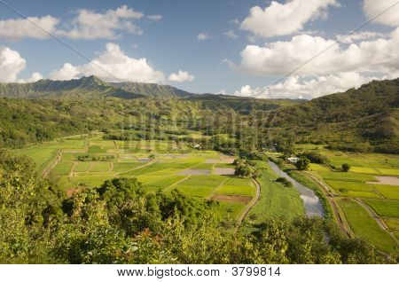 Hills Of Hanalei Valley And Taro Fields