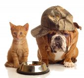 image of cat dog  - english bulldog and orange kitten sitting at food dish - JPG