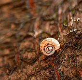 Snail On A Tree
