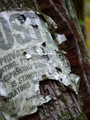 stock photo of hillbilly  - Closeup of a weathered sign nailed to a tree - JPG