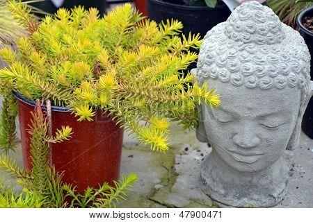 Decorative Garden Buddha