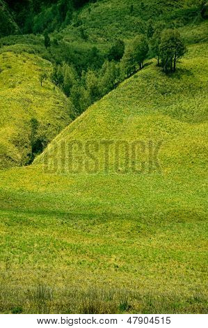 view of trees and meadow landscape